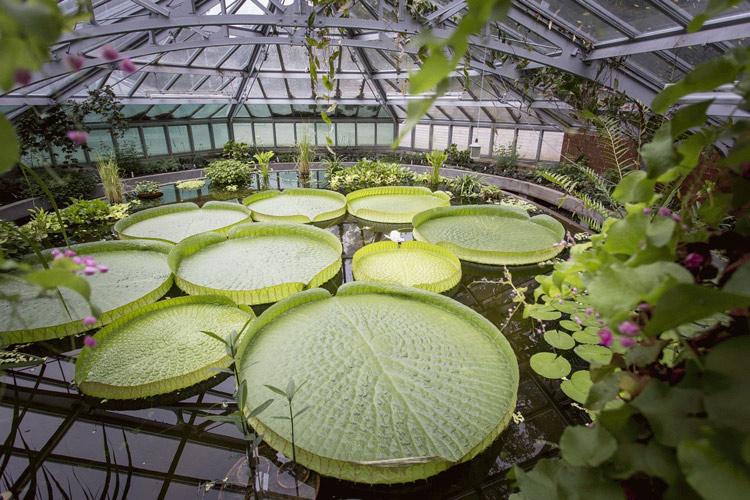 Botanischer Garten Der Technischen Universitat Dresden Parks Und