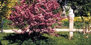 Arboretum JUWÖ