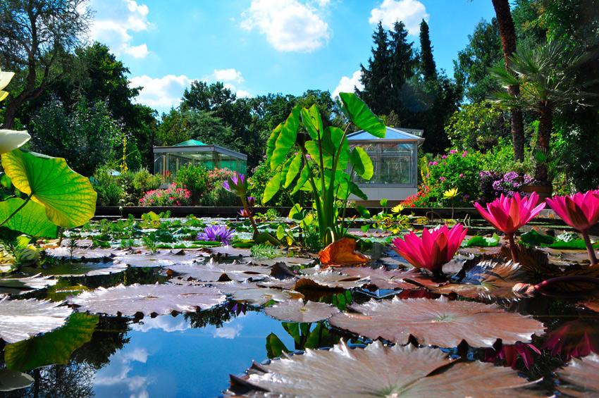 botanischer garten der universität erlangen-nürnberg | parks und,