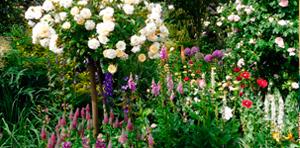 Herberts Garten