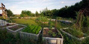 Querbeet – Gemeinschaftsgarten an der Petersburg